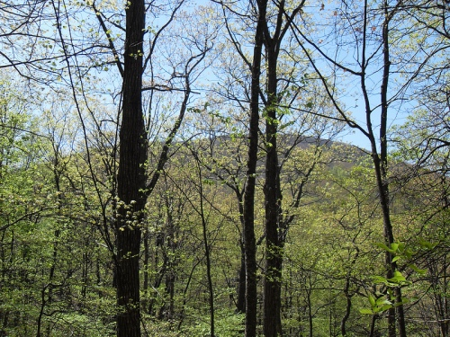 Blood Mountain Through The Trees.  Photo courtesy nshivar at Flickr