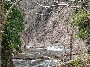 Downed Trees In Nantahala River Near NOC Wesser, NC